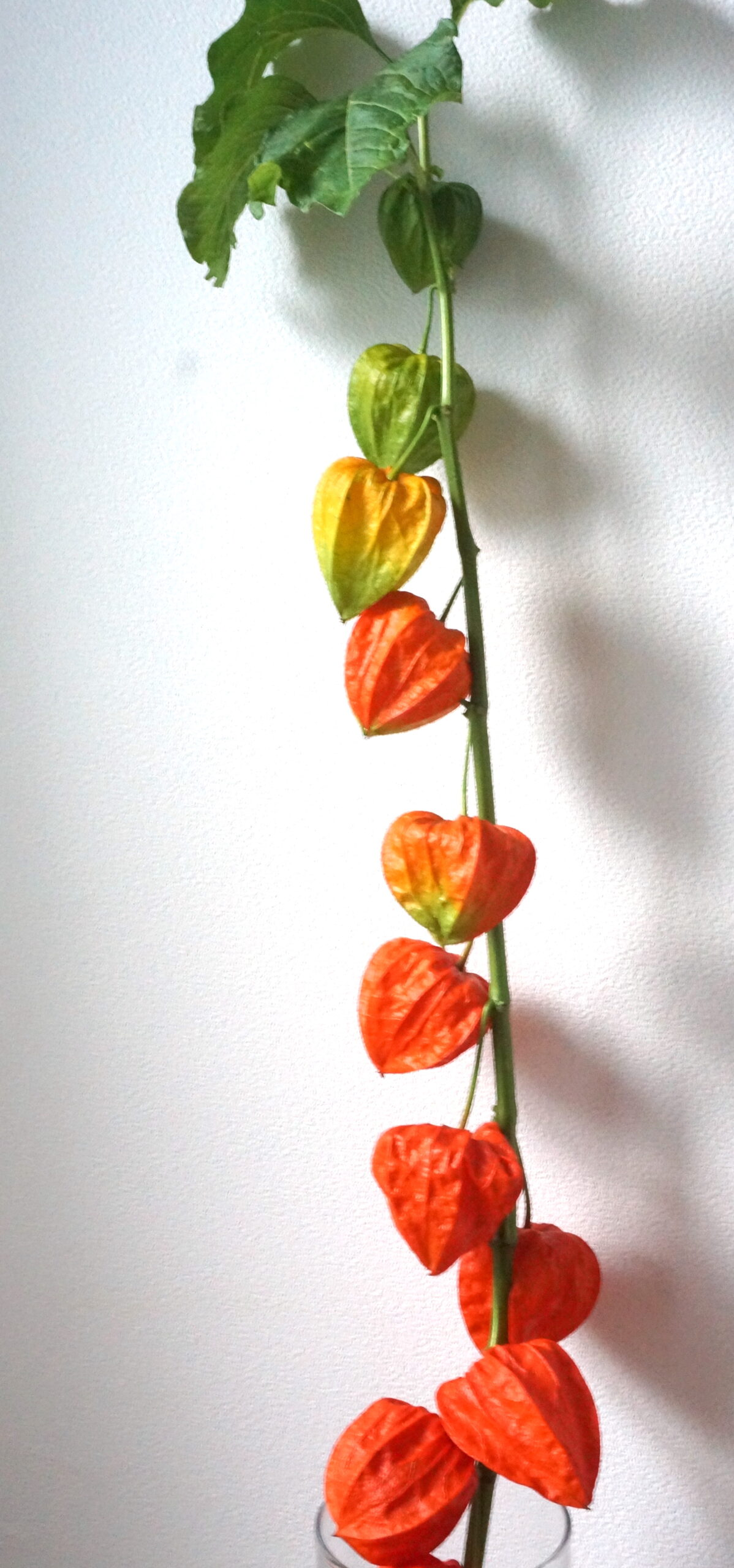 hanahi.flower 花日
